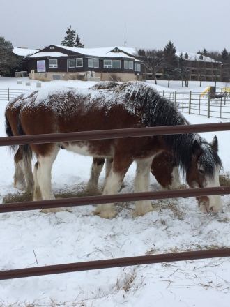 Horses at Elkhorn Resort